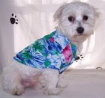 Hi_shirt_dog