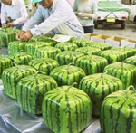 Square_melons